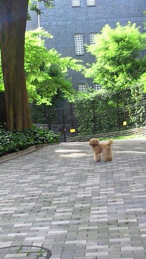 2010.6.20   あさのさんぽ_a0083571_185192.jpg