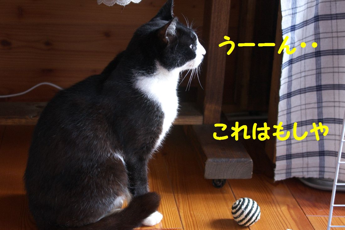 f0197682_23214217.jpg