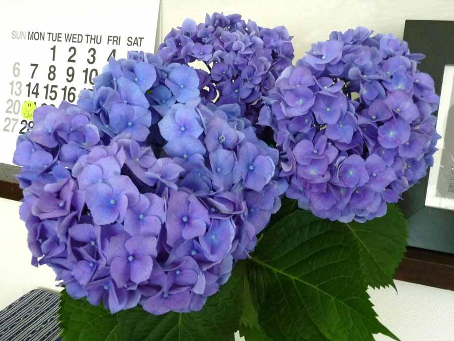 6月の花っ!!_c0223095_1421476.jpg