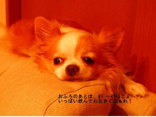 c0162005_8431588.jpg