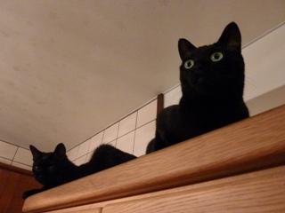 ふたりの猫さん高いとこ猫 のぇるろった編。_a0143140_20561064.jpg