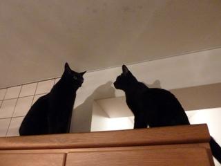 ふたりの猫さん高いとこ猫 のぇるろった編。_a0143140_2058742.jpg