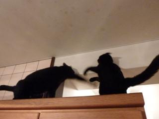 ふたりの猫さん高いとこ猫 のぇるろった編。_a0143140_2059070.jpg