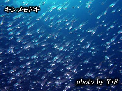 Divehouse Kanaloa  八丈島 ダイビングログ_b0189640_2110577.jpg