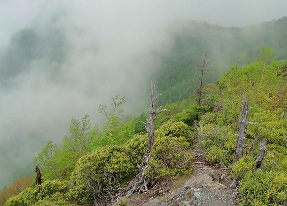 <2010年6月12日>奥秩父の遥かなる幽寂峰「和名倉山」 (リベンジ登山)_c0119160_21291373.jpg