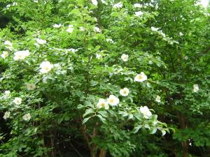柏の葉公園_c0167560_17264185.jpg