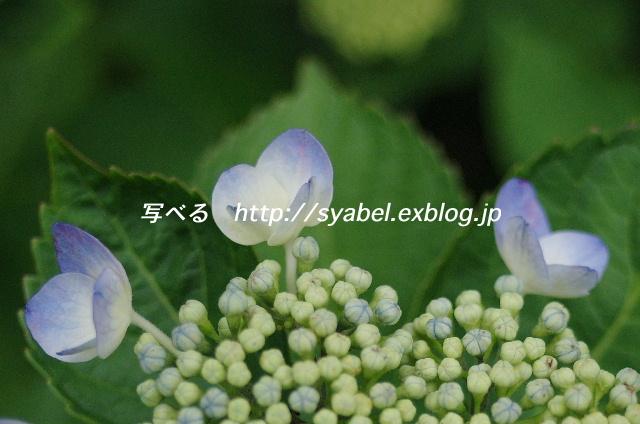 c0153764_19195478.jpg