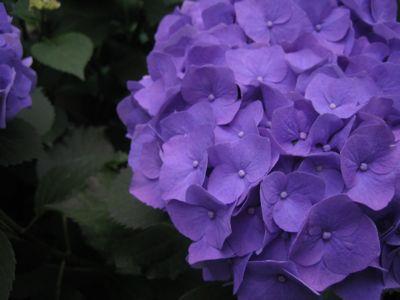 春が過ぎ梅雨になり。。。_e0003273_16425497.jpg