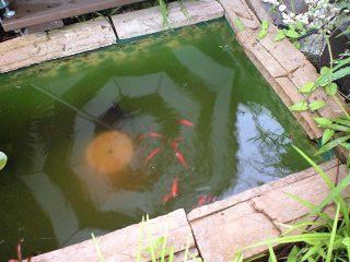 水のガーデン☆簡単!お池の作り方_a0142778_1425127.jpg