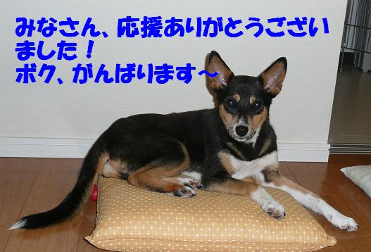 f0121712_8343858.jpg