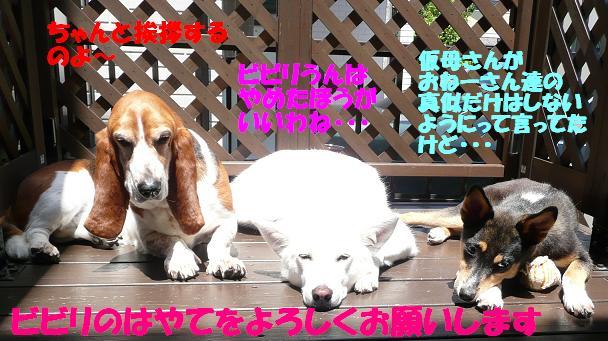 f0121712_8344976.jpg