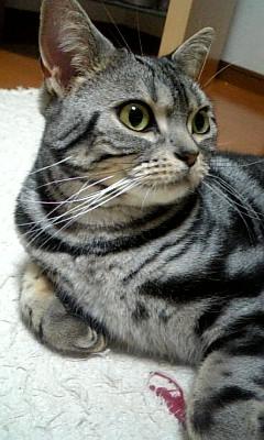 猫のお友だち 第2回ゆ○ねこ会議ヴィヴィアンちゃん編。_a0143140_216258.jpg
