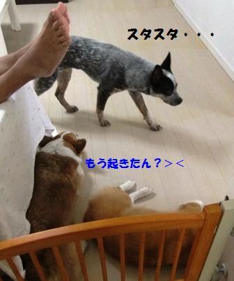d0081541_084815.jpg