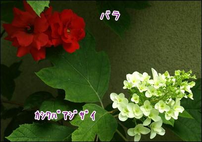 d0139352_2350885.jpg