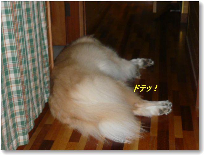 a0100160_2011363.jpg