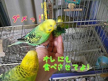 f0196665_0563.jpg