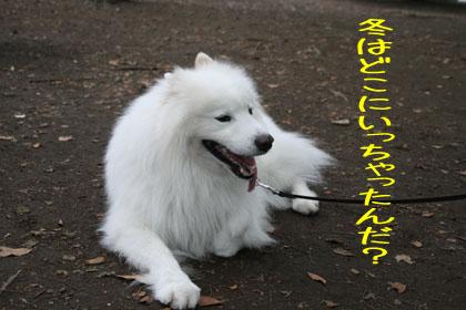 c0161772_124818.jpg