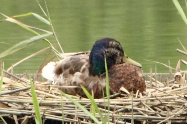 ★先週末の鳥類園(2010.6.19~20)_e0046474_19165646.jpg