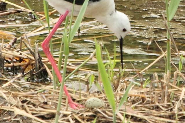 ★先週末の鳥類園(2010.6.19~20)_e0046474_19191898.jpg