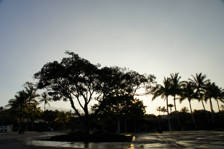 ハワイ島旅行記2010 ー跋・帰路。-_f0189086_20294466.jpg