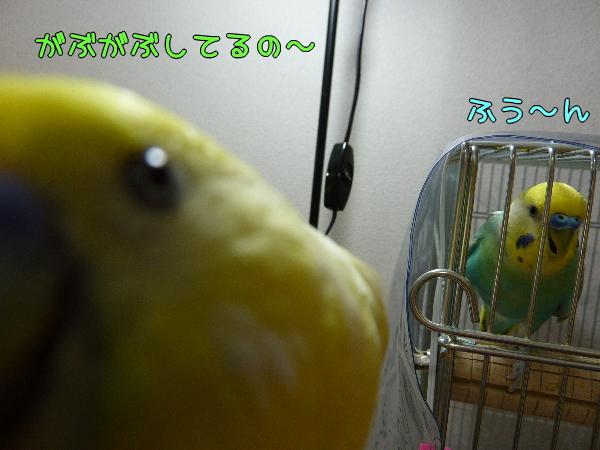b0062090_11836.jpg