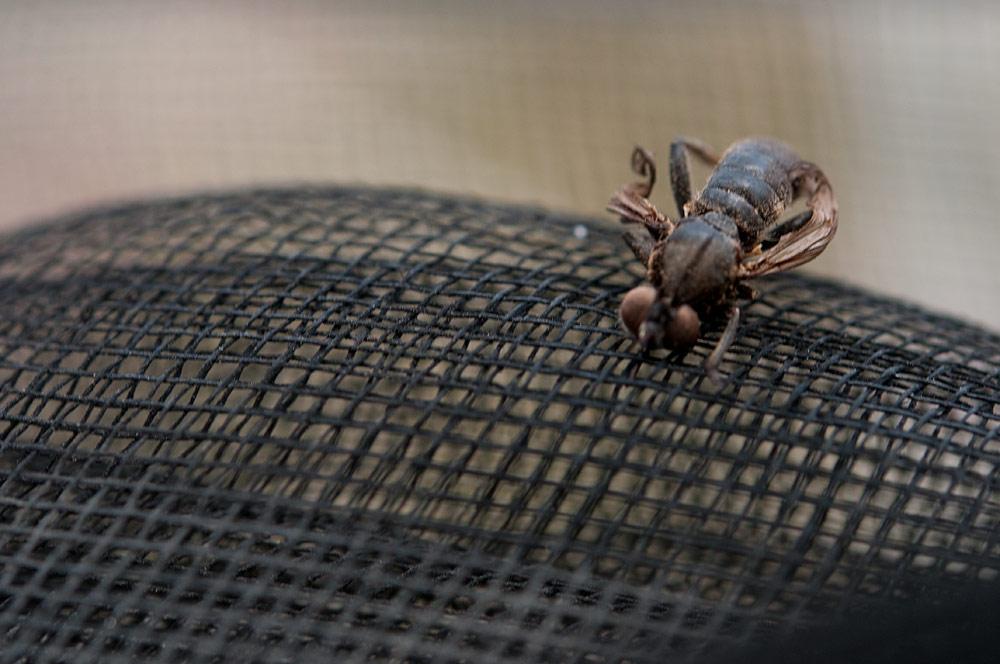 私設昆虫記-34 生と死の差分_f0215695_1840950.jpg