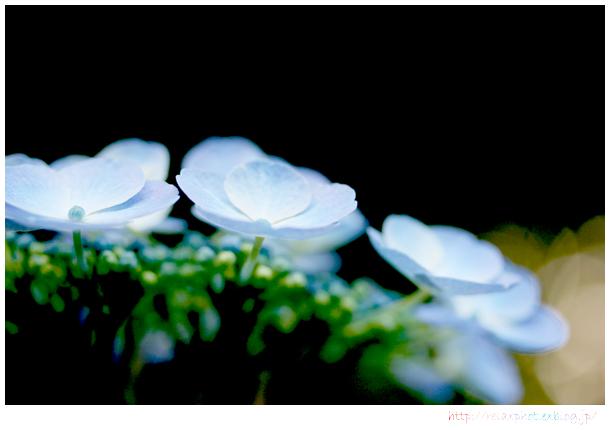 f0200306_2011777.jpg