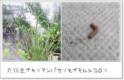 f0203406_813591.jpg