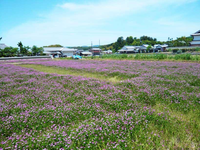 奈良の明日香村 de サイクリング _c0191808_0133170.jpg