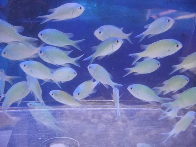 熱帯魚・海水魚・水草_f0189122_1344974.jpg