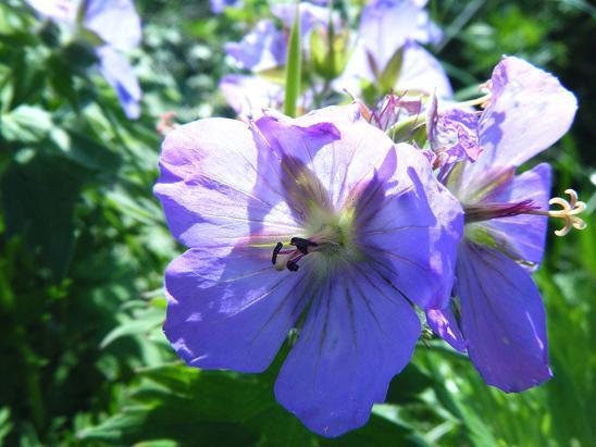 花が咲く礼文空港_e0120026_21364150.jpg