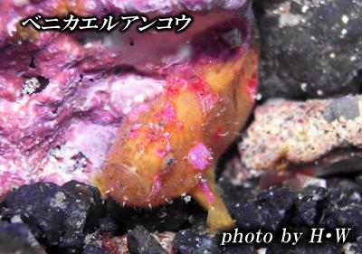Divehouse Kanaloa  八丈島 ダイビングログ_b0189640_21501240.jpg