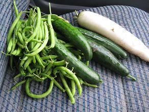 収穫→弁当_a0139242_6412555.jpg