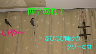 b0158061_20322446.jpg