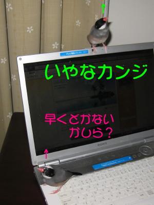 b0158061_20324656.jpg