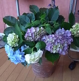薔薇の一日教室@北鎌倉 【おまけ】侘助_b0051666_17165710.jpg