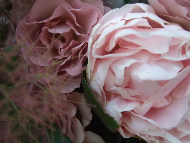 オークリーフ(かぐや姫とピンクファーの花束)_f0049672_1194195.jpg