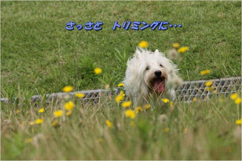f0223295_19171078.jpg