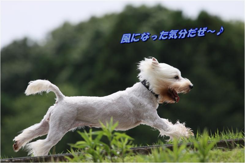 f0223295_19334044.jpg