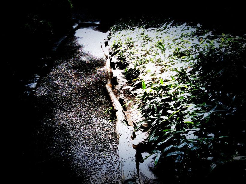 雨上がりの午後_b0060102_14261432.jpg