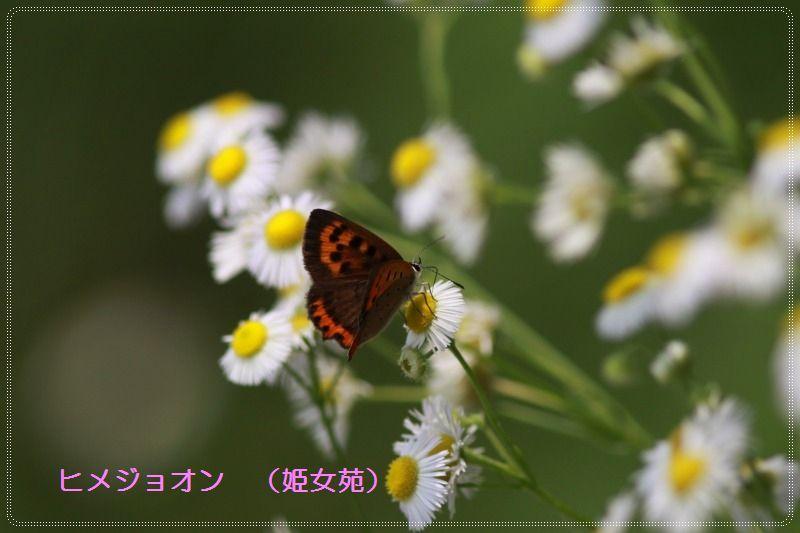 a0057905_20553049.jpg