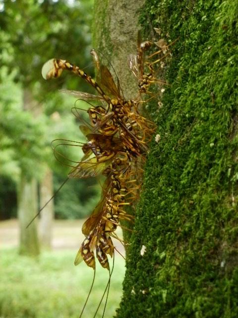 蜂の様な、でも尻尾が異状に長い虫_b0025008_2264559.jpg
