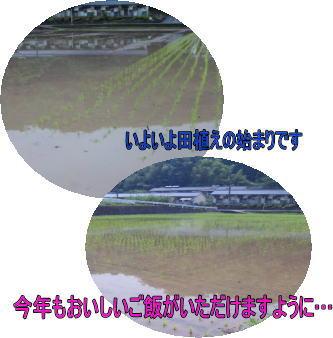 d0070316_1553146.jpg
