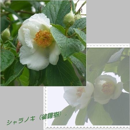 c0223117_2014151.jpg