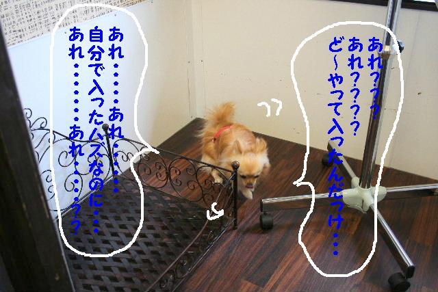 b0130018_92845100.jpg