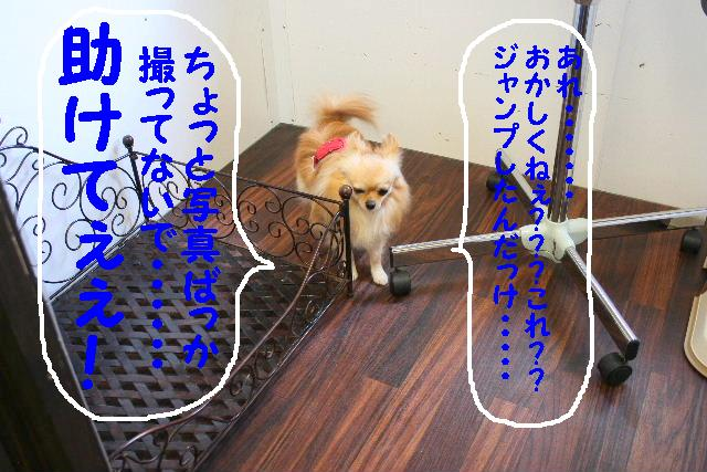 b0130018_928533.jpg