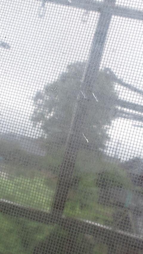 雨が降り続く_d0150722_22491958.jpg