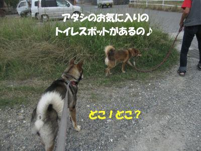 f0143123_20115652.jpg