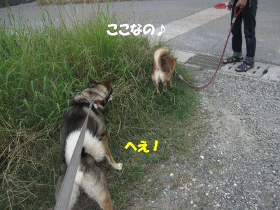 f0143123_20121123.jpg