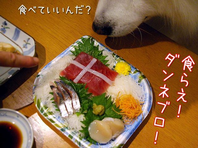 おめでとう日本!_c0062832_18113357.jpg